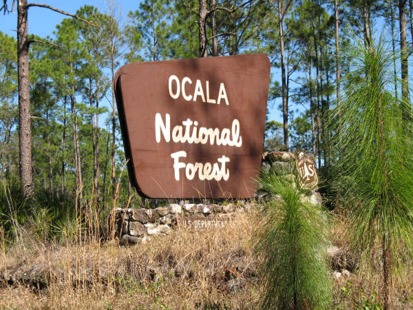 Ocala National Forest